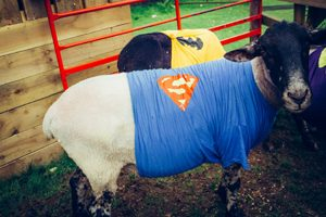 Finkley Down Farm Super Hero weekend
